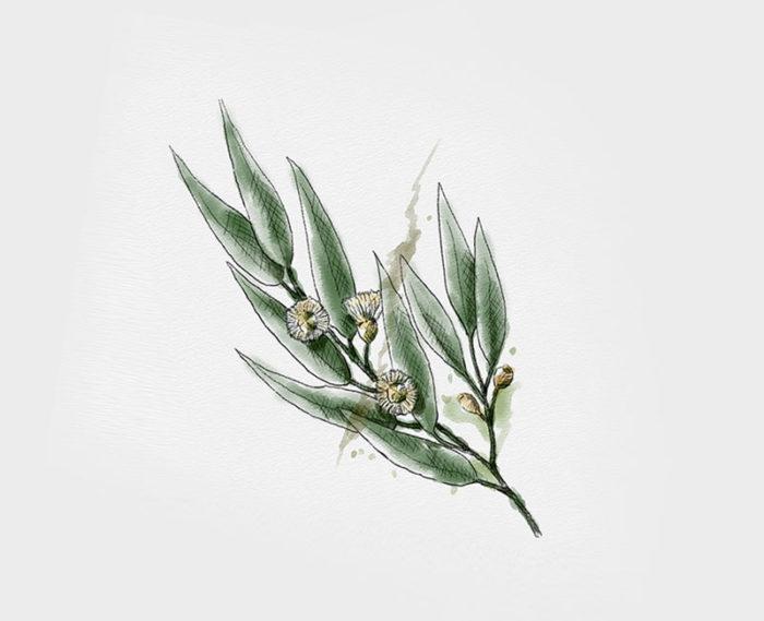 Organic Eucalyptus Essential Oil 10ml